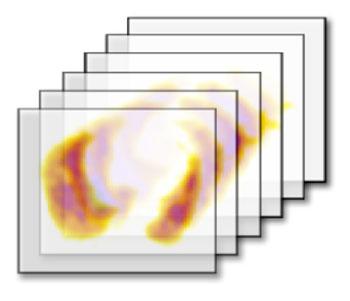 vitalim standard practices scan